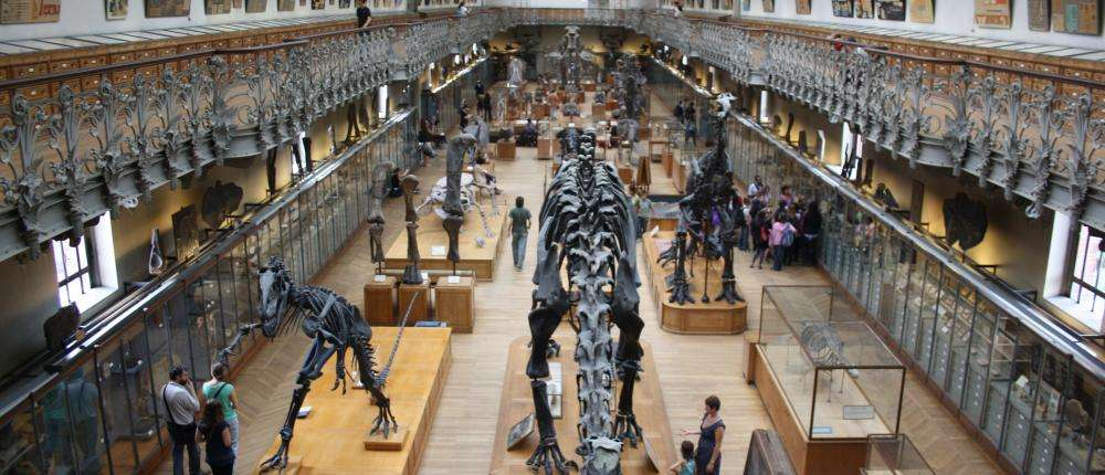 When in Paris, visit the Jardin des Plantes and the Museum of Natural History